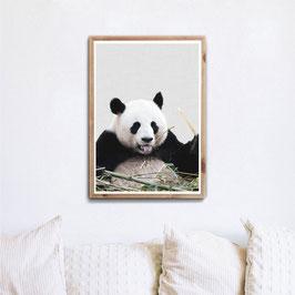 Ups Panda