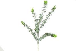 Eucalyptus groen