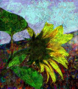 Sun Flower 632