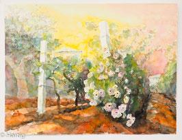 Ulrich Hartig - Rose nella Vigna