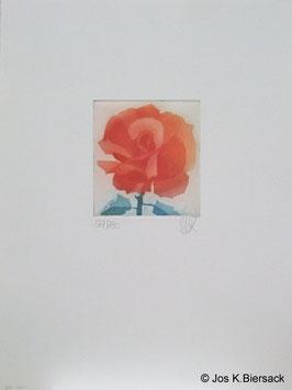 Jos K. Biersack - Rose