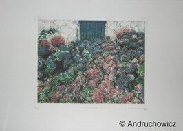 Dietlinde Andruchowicz - Noch mehr Hortensien
