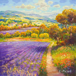 Jean Claude Picard - Lavendel (221)
