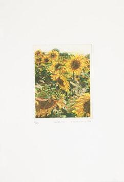 Dietlinde Andruchowicz - Blüten usw.