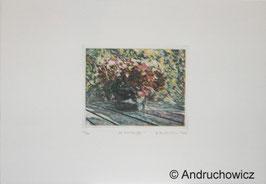 Dietlinde Andruchowicz - Kleine Hortensien