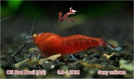 AS Grade of OE Full Red RKK (Red Devils)