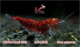 SS Grade of Full Red RKK (Red Devils)