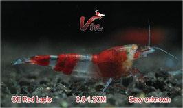 OE Red RKK Random Type (Red Lapis)