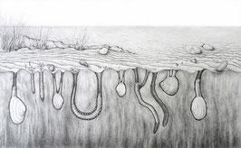 Tiere im Nordseewatt - Format: 28 x 16 cm - Bleistiftzeichnung
