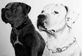 Tierpärchen als Schwarz/weiß Zeichnung nach Fotovorlage (Größe bitte im Auswahlmenü wählen)