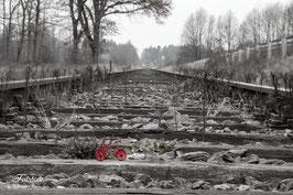Rotes Rad auf Gleis