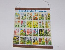 """EF034 Wandtafel, Schultafel """"geschützte Pflanzen"""" 8x9cm"""