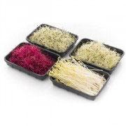 Bio Sprossen Asia Gemüse Mix, 180g