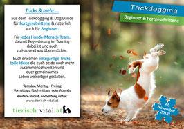 Trickdogging Klasse 2