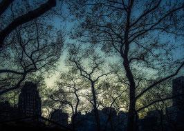 Bryant park | NYC