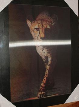 """3D Wechselbild """"Raubkatzen"""""""