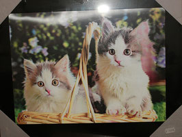 """3D Wechselbild """"Kitten"""""""