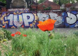 """Postkarte """"Frühling in Berlin"""""""