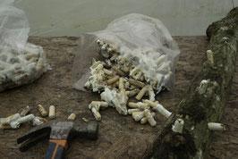 Inóculo de shiitake en espigas de madera de haya