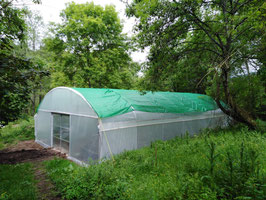 Invernadero de cultivo de setas