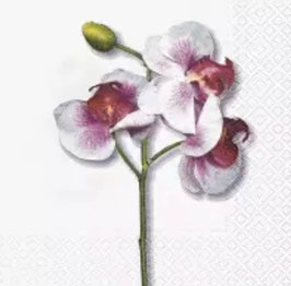 Classic orchid white
