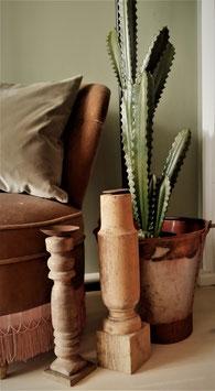 Cactus caciana