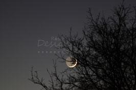 Mondfinsternis 1