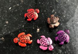 Schildkröten Mix bunt