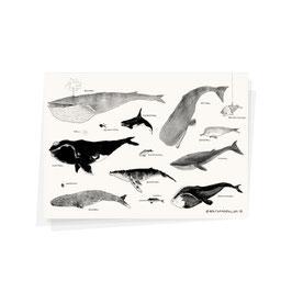 """Postkarte """"Wale"""""""