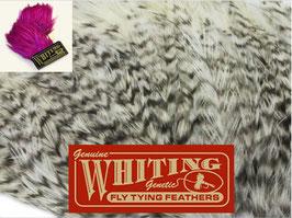 Whiting Streamer Pack