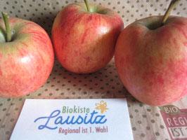 Apfel Rubens (Umstellungsware auf Ökoanbau) (3,50 € / kg)