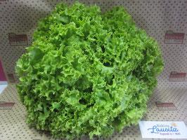 """Salat """"Lollo Bionda"""" Stück (Umstellungsware auf Ökoanbau)"""