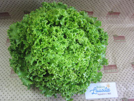 Bio grüner Batavia-Salat Stück