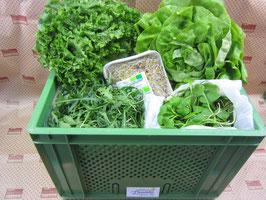 Biokiste Salate