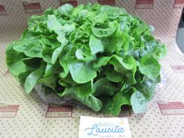 Bio grüner Eichblattsalat Stück