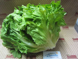 Bio Endivien-Salat