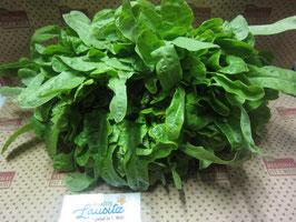 Bio Salat Cerbiatta-Salat Stück