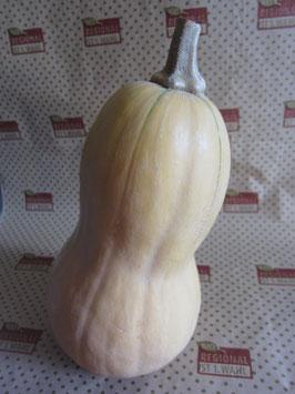Bio Kürbis Butternut  (2,50 € / kg)
