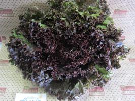Bio roter Batavia-Salat Stück