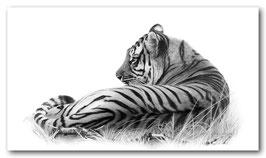 tigers rest