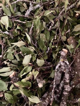 Zwetschgenzweige mit Blättern (getrocknet) 100g