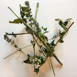 Sonderposten: Pfefferminzblüten mit Stielen & Blättern 10g