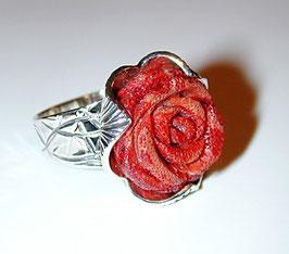 Schaumkorall-Rose