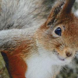Tiermotivkissen Eichhörnchen - 50 x 10 x 50 cm