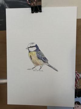 Postkarte - Blaumeise