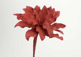 fleur cumbia corail