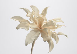 Fleur Cumbia Crème