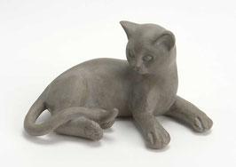 Chat rêveur gris