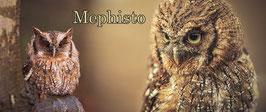 Kreischeule Tasse Mephisto