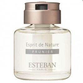 Hương thơm Esteban Hoa mận